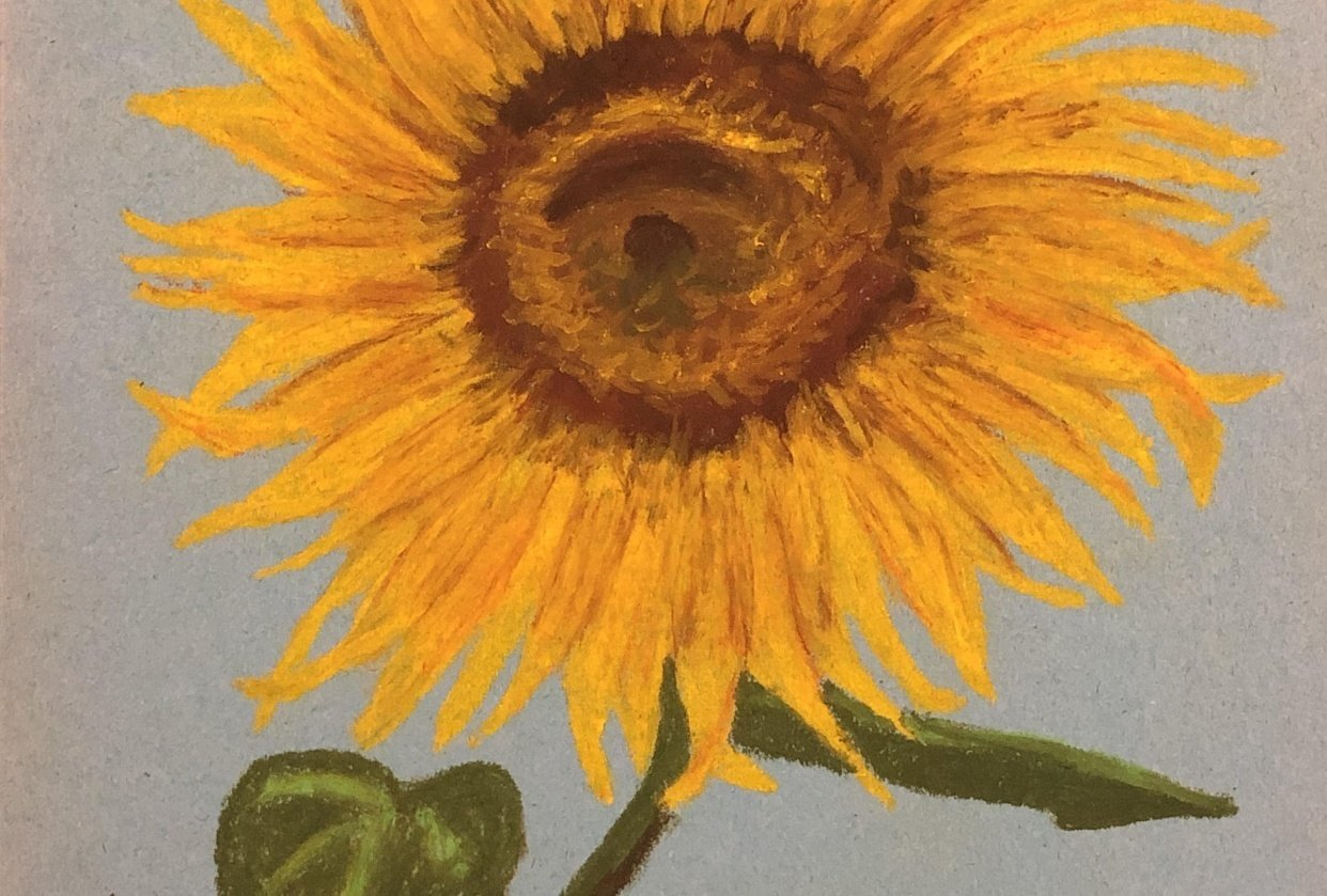 Oil Pastel Sunflower - student project