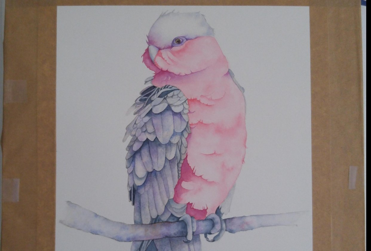 Louise's Galah by Avi - student project