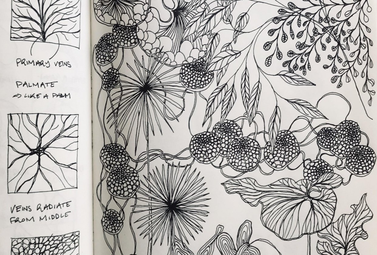 Drawing Plants & Leaves - student project