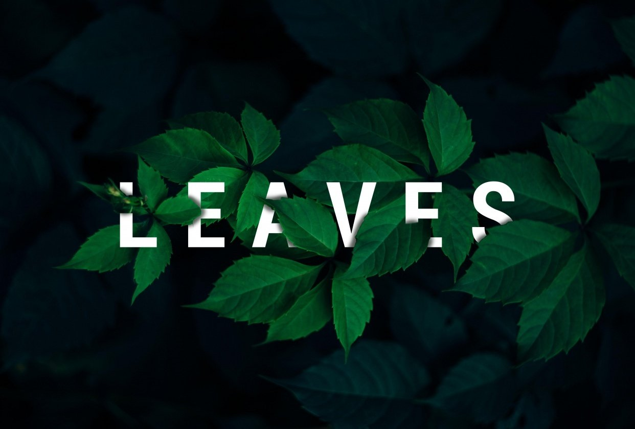 Leaves - student project