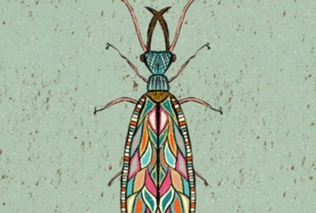 Colorfull insects! - student project