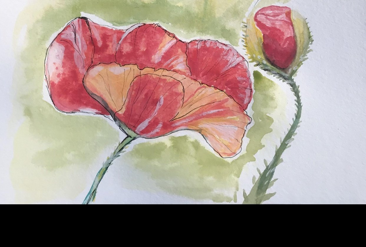 Enthusiast beginner's poppies - student project
