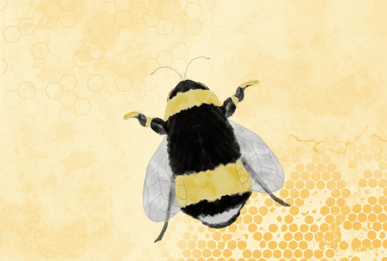 Honey Bee - student project
