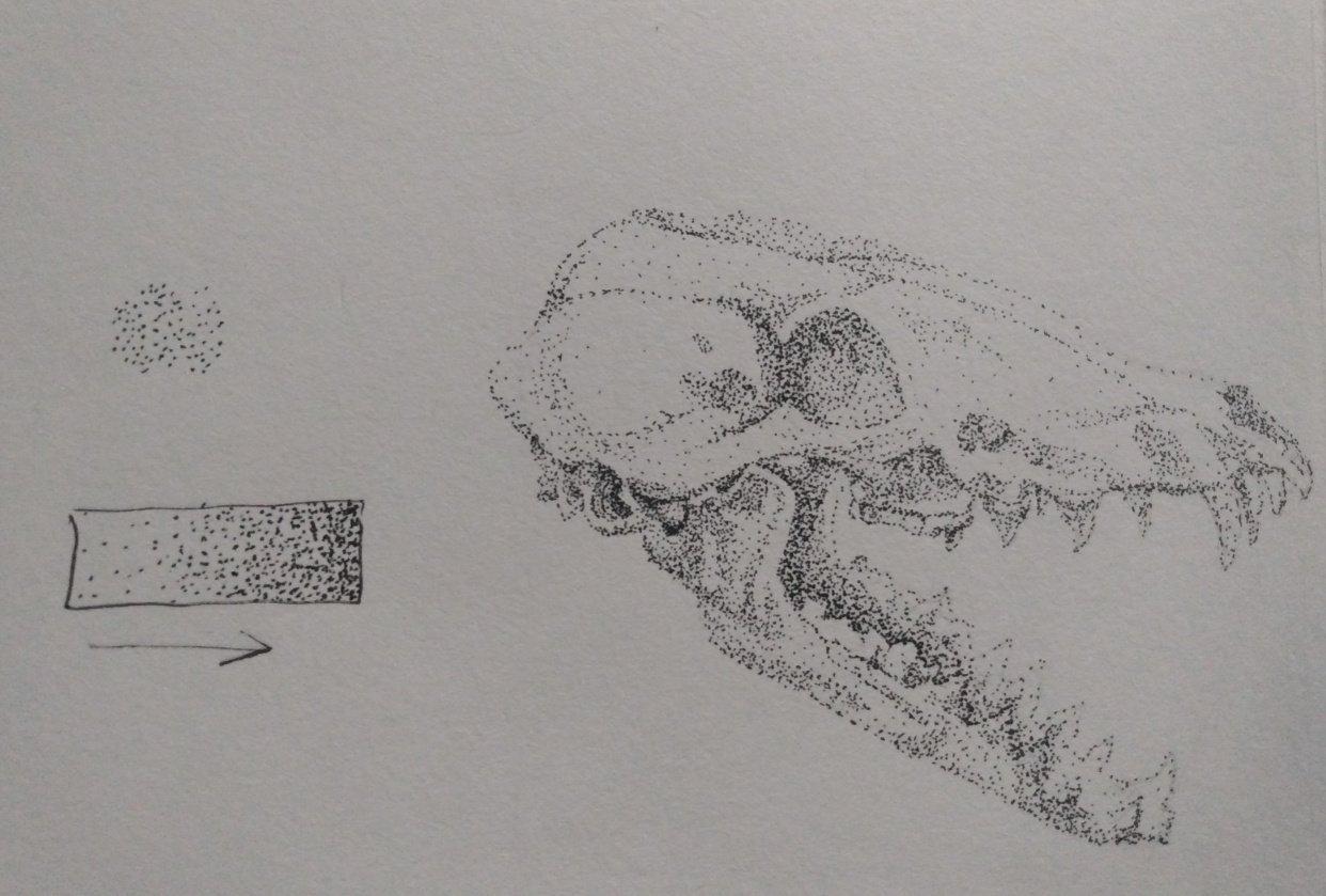 Fox Skull - student project