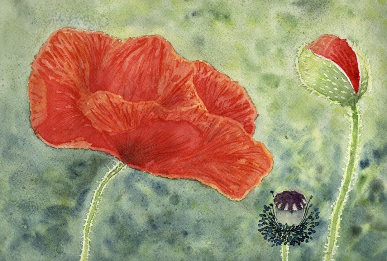 Loose poppies in different styles - student project