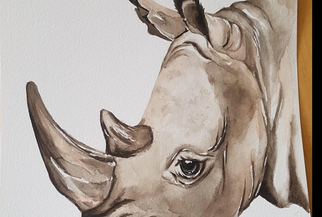 Rhinoceros - student project