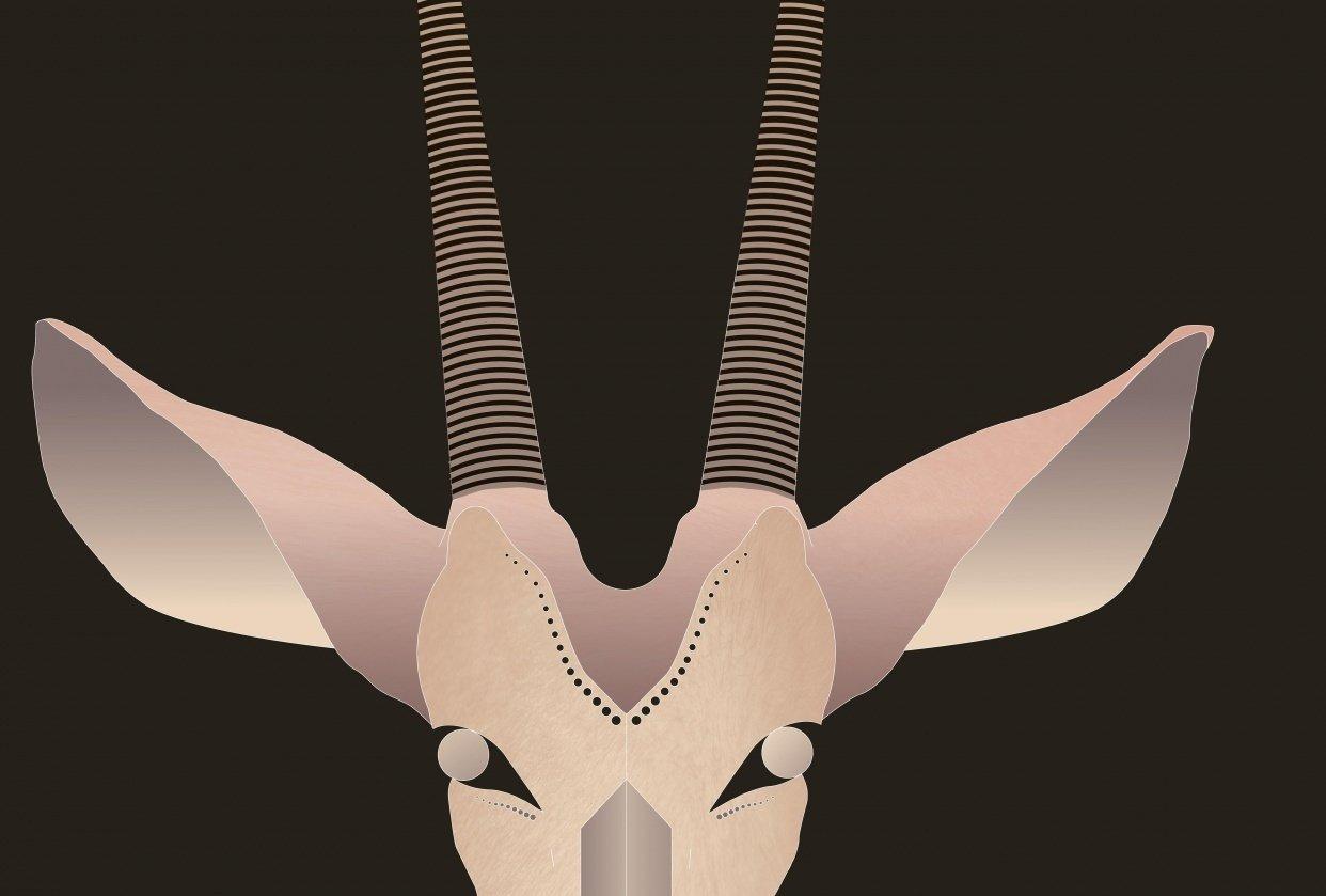 Arabian Oryx - student project
