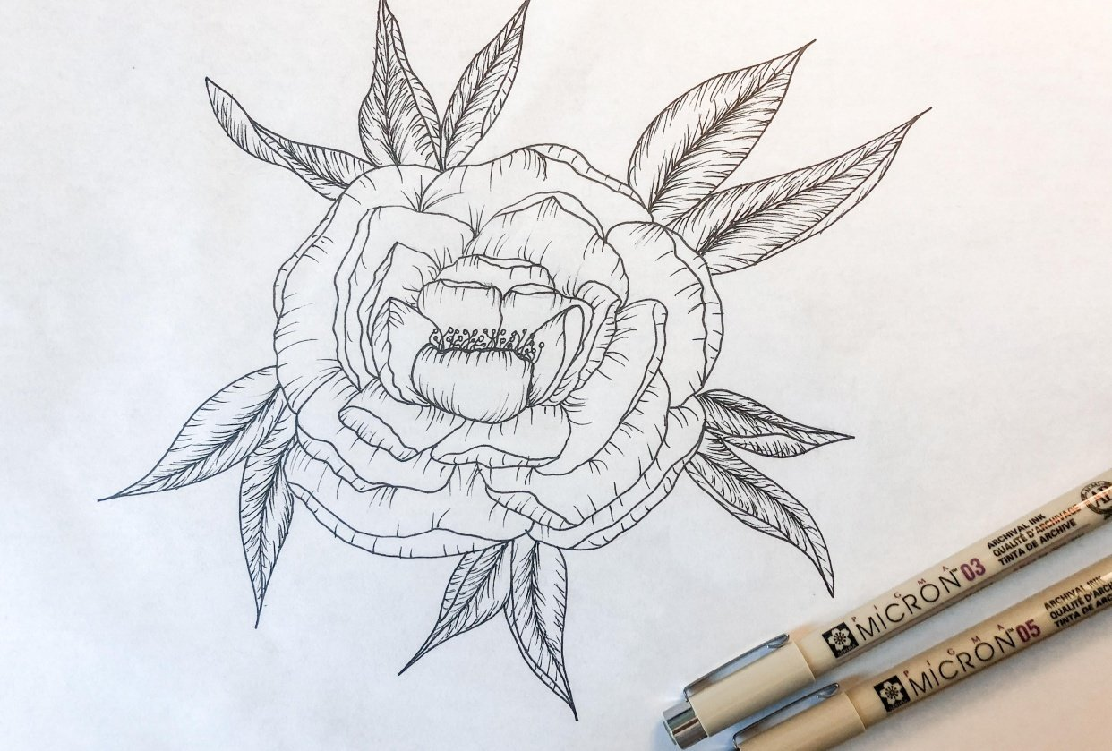 Peony Drawing - student project