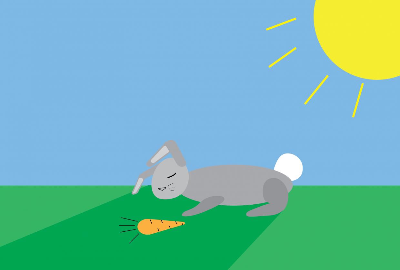 Sleeping Rabbit - student project