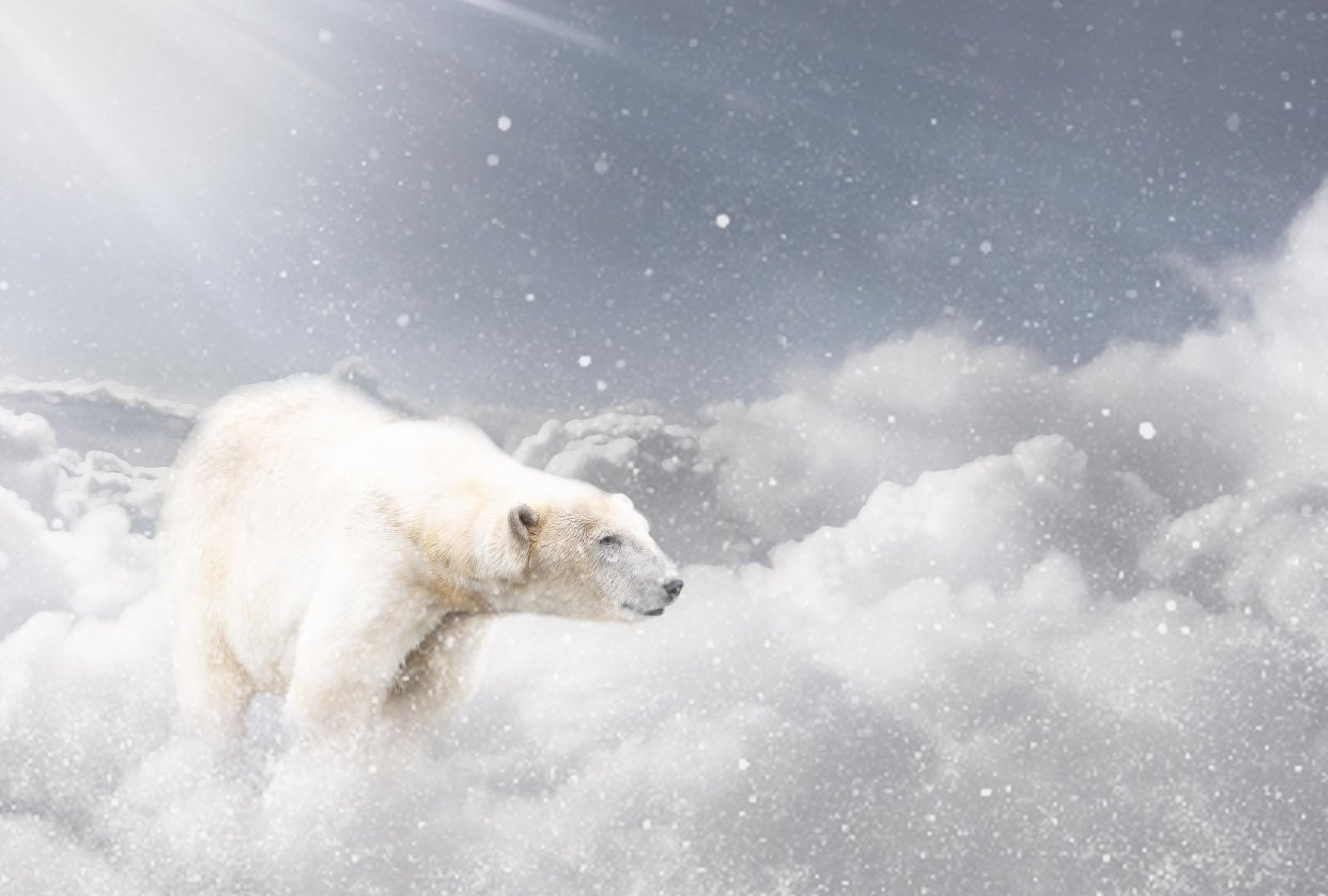 Polar bear in the sky - student project