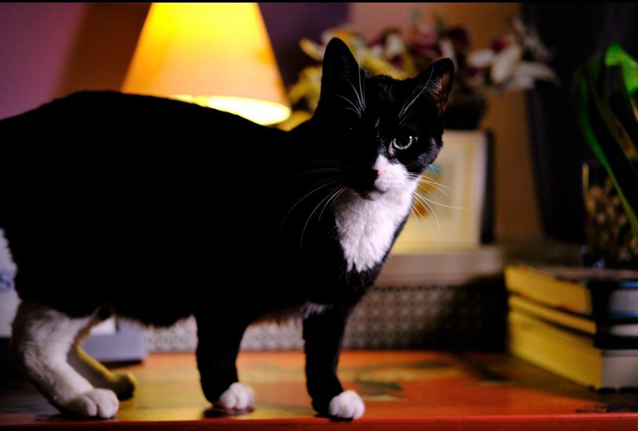 Quarantine Cat - student project
