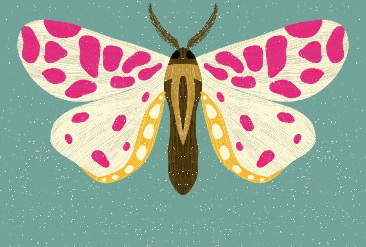 Beautiful Bugs - student project