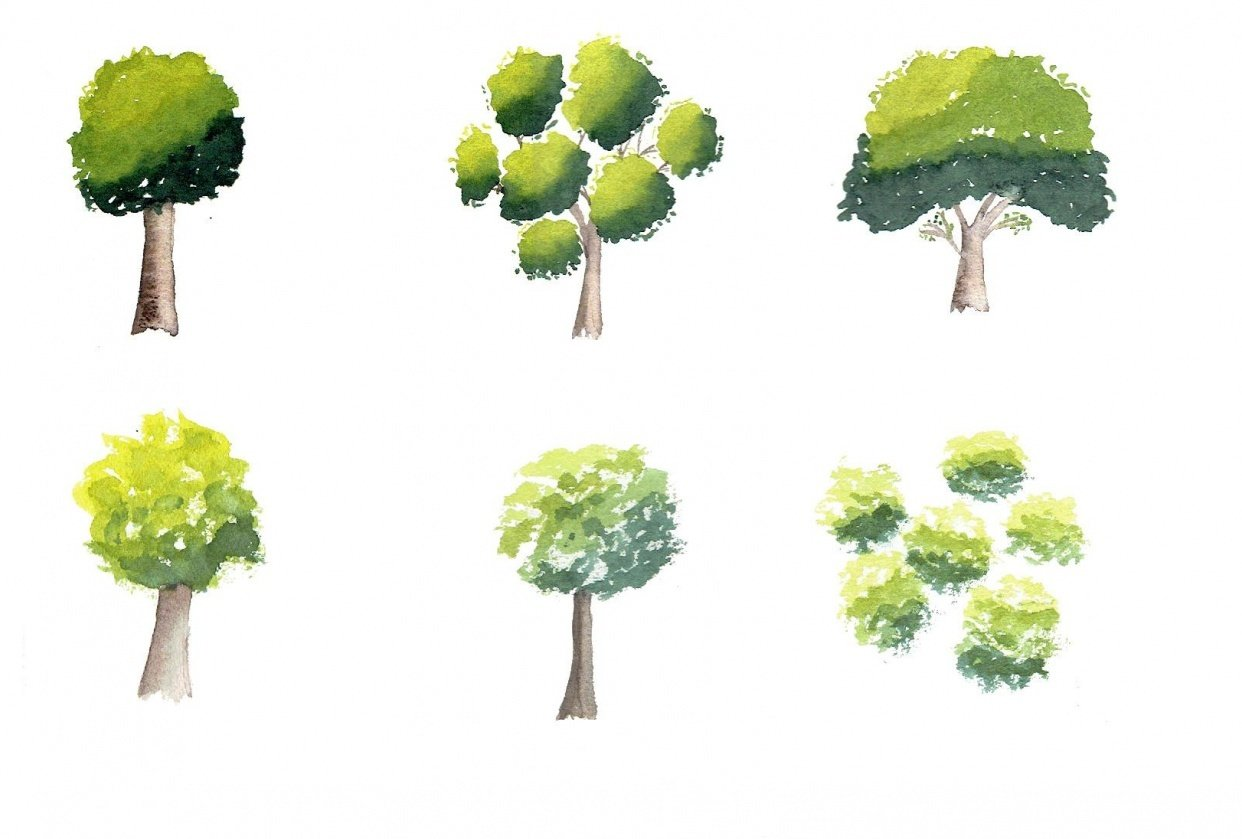 Trees - student project