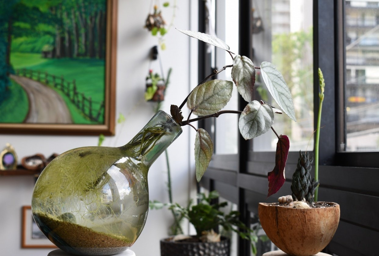 House Plant Hiking - student project