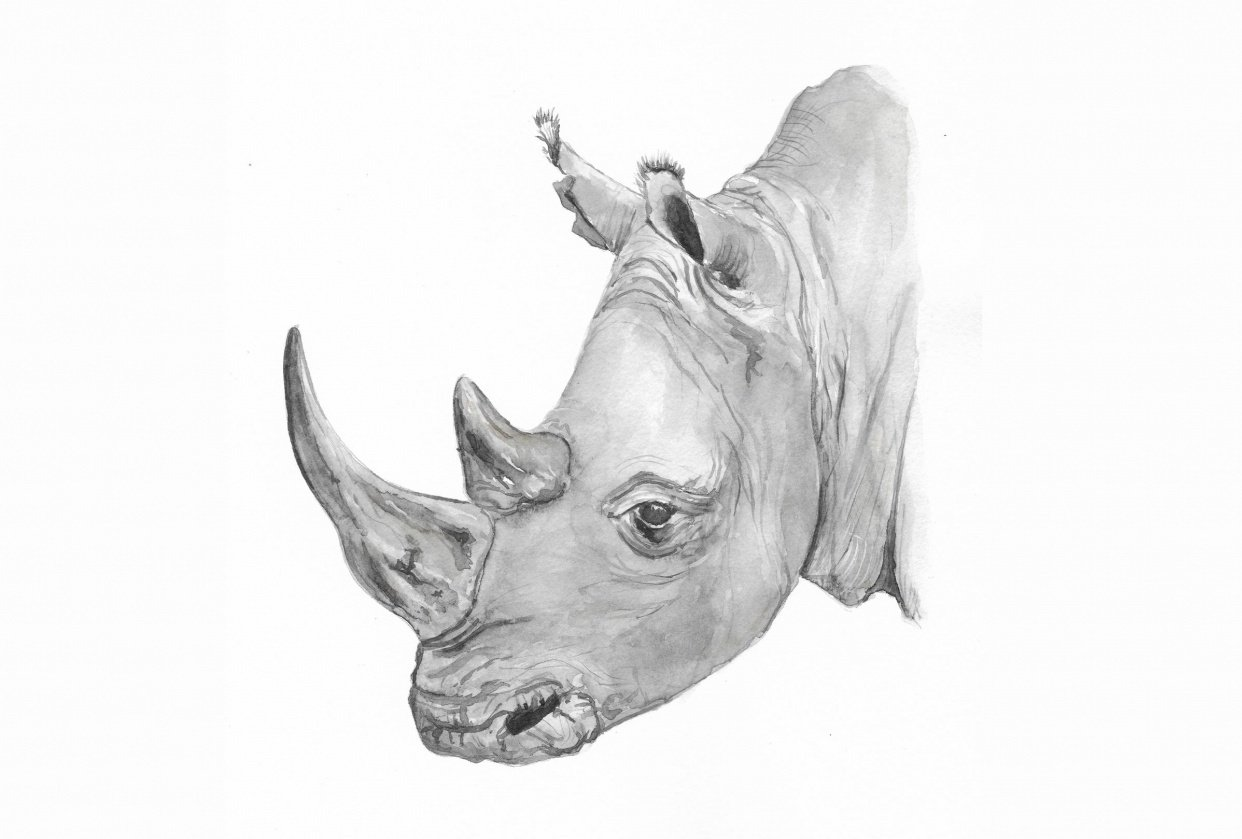 Katie's Rhino - student project
