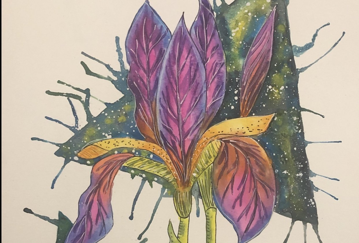 Colorful Iris! - student project