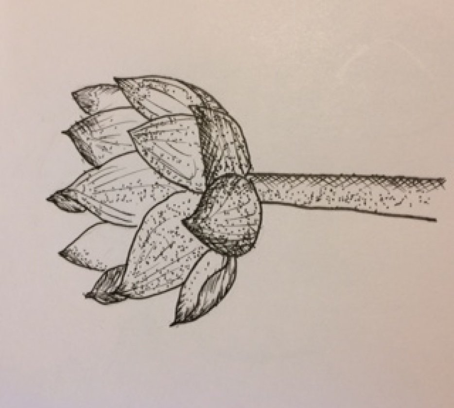 Lotus* - student project