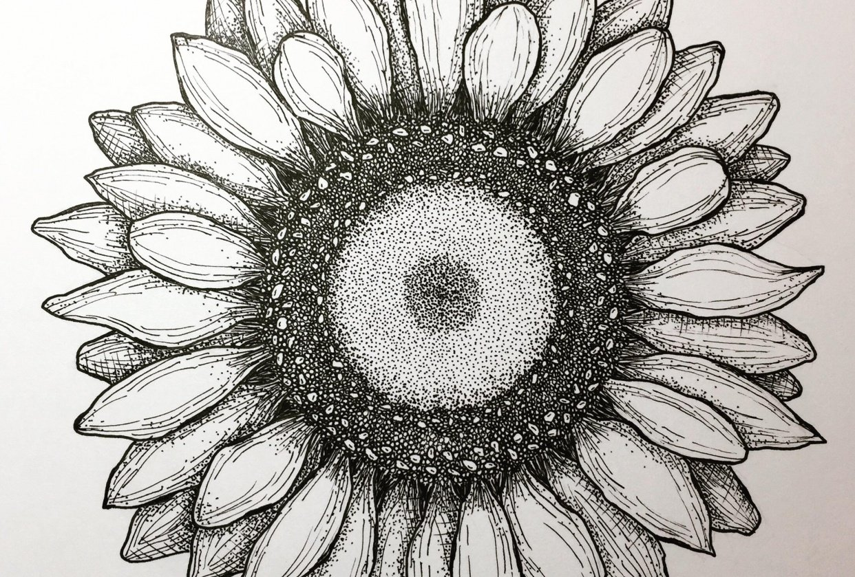 Ink Pen Sunflower - student project