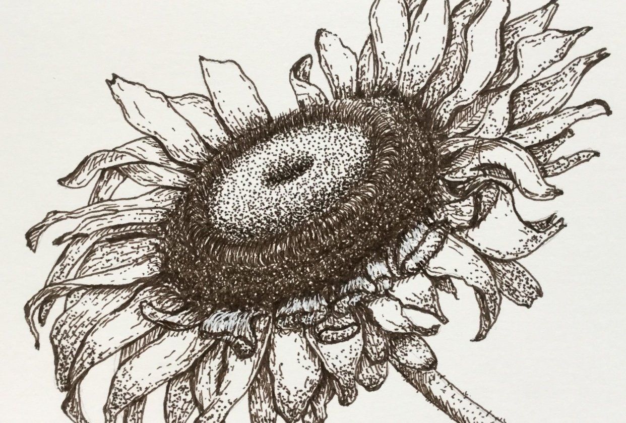 My sunflower - student project