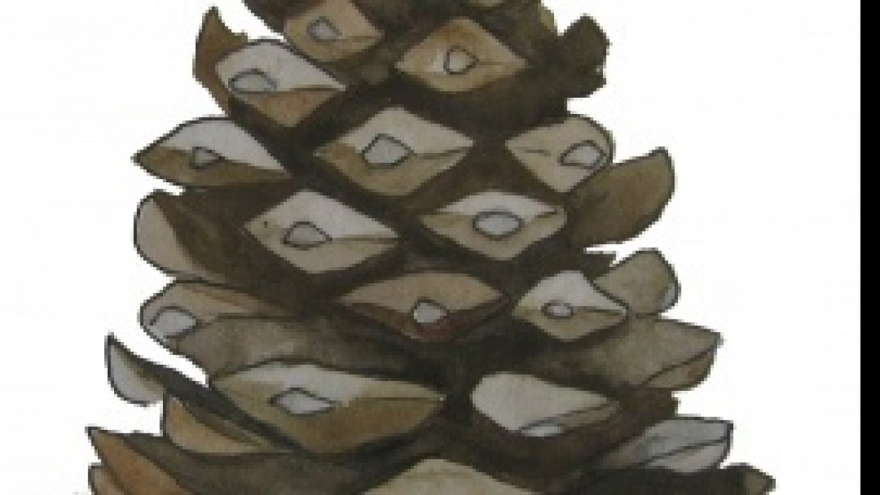 Pinecone Garden handmade art and gifts site - student project
