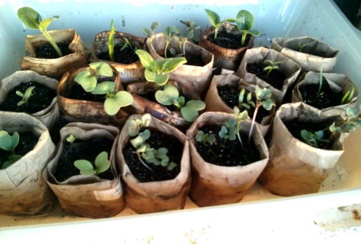 Paper Pots - student project
