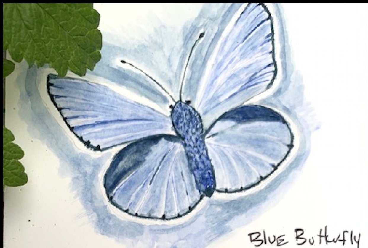 Water Color Butterfly - first attempt. - student project
