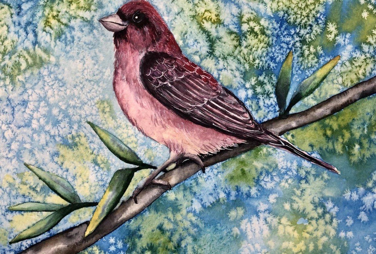Purple Finch - student project