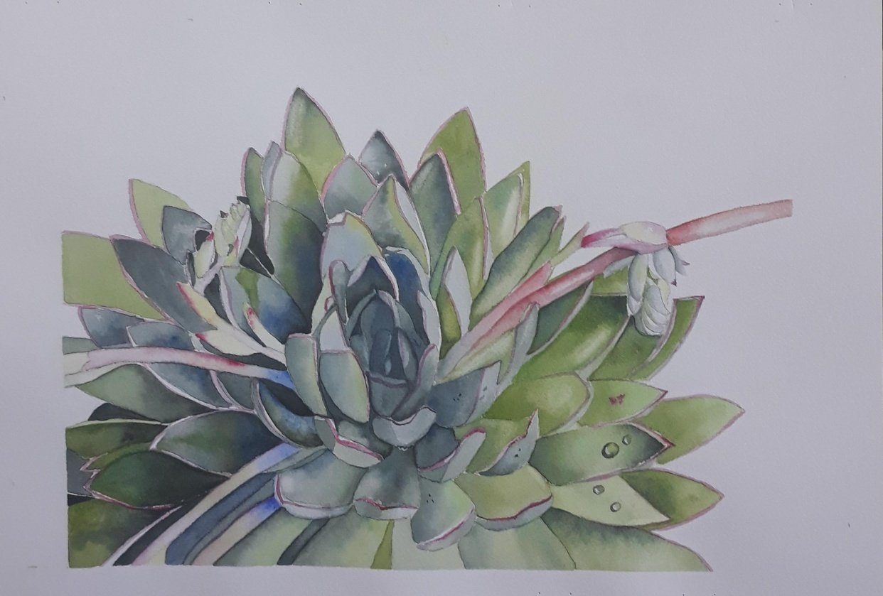 Watercolour Succulent - student project