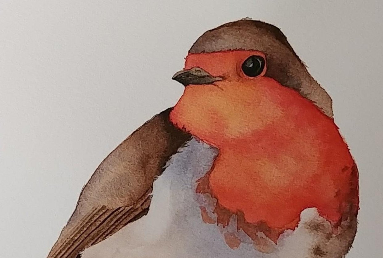 Little Robin - student project