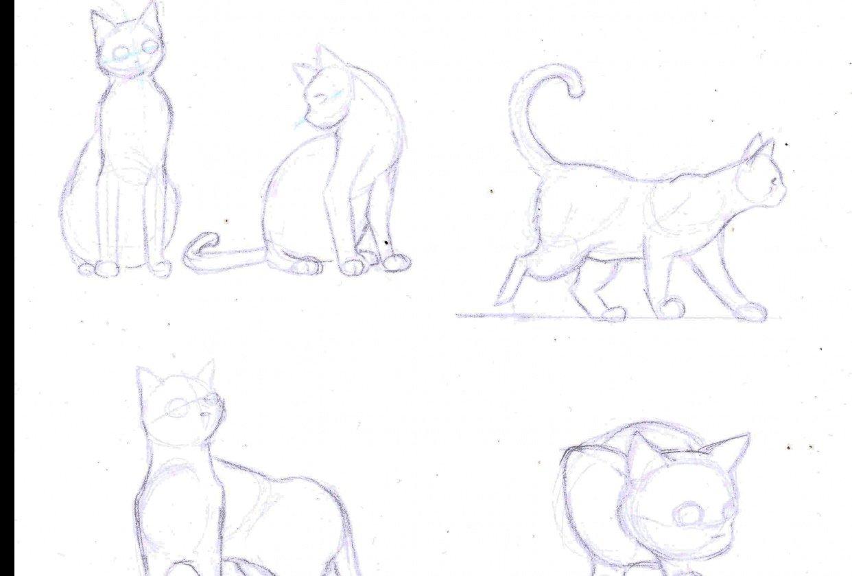 Cat Study - student project