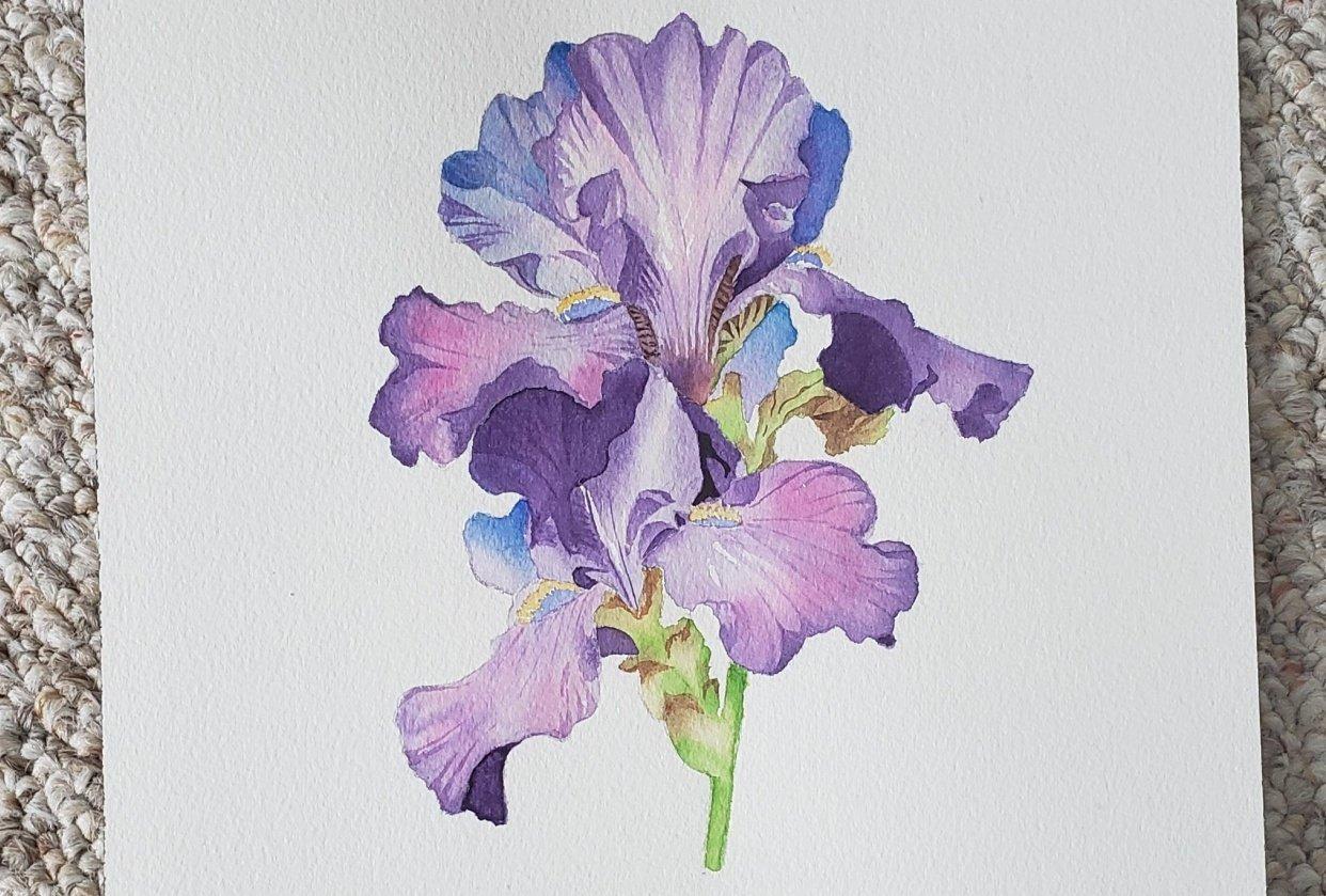 Iris - student project