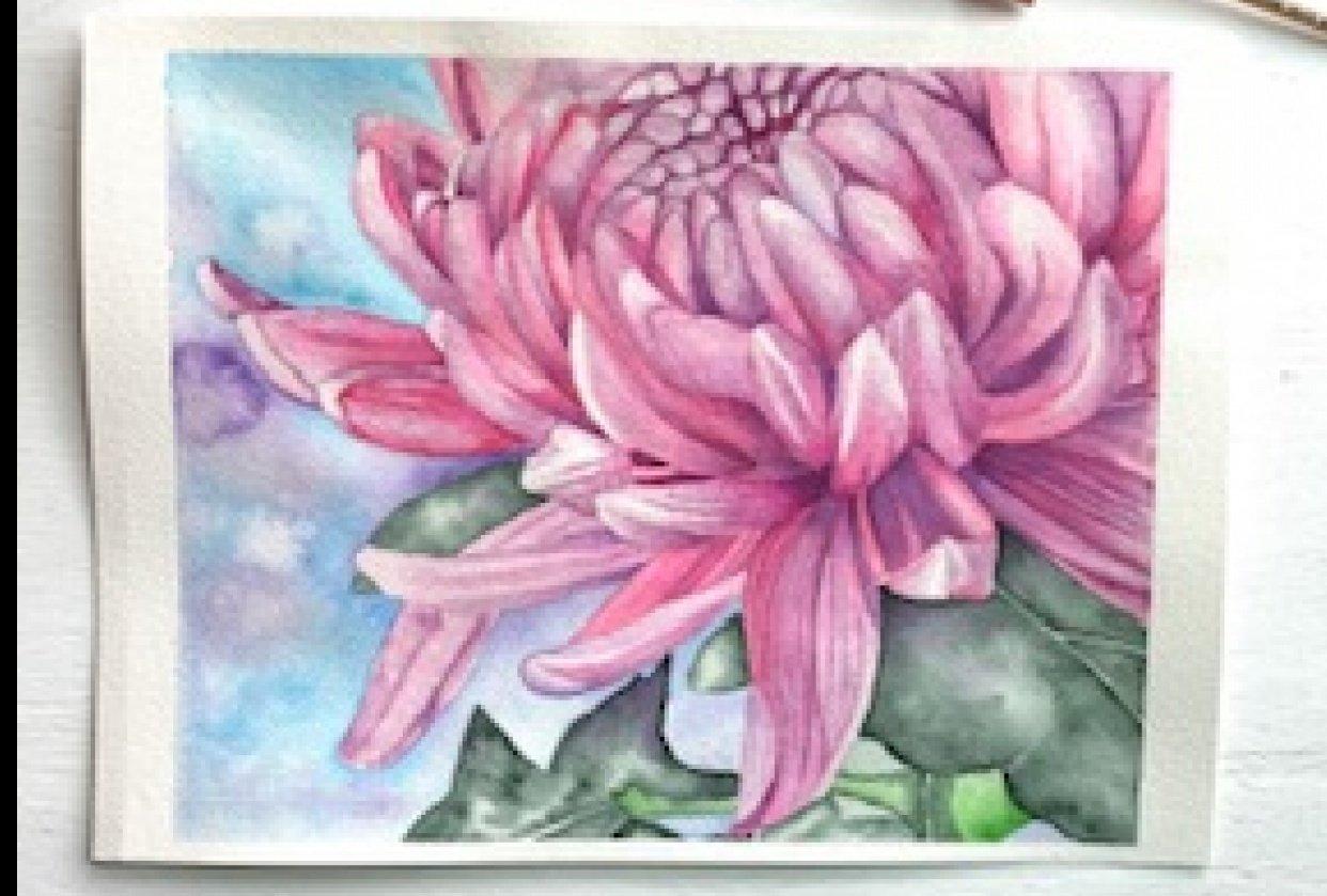 Chrysantemum - student project