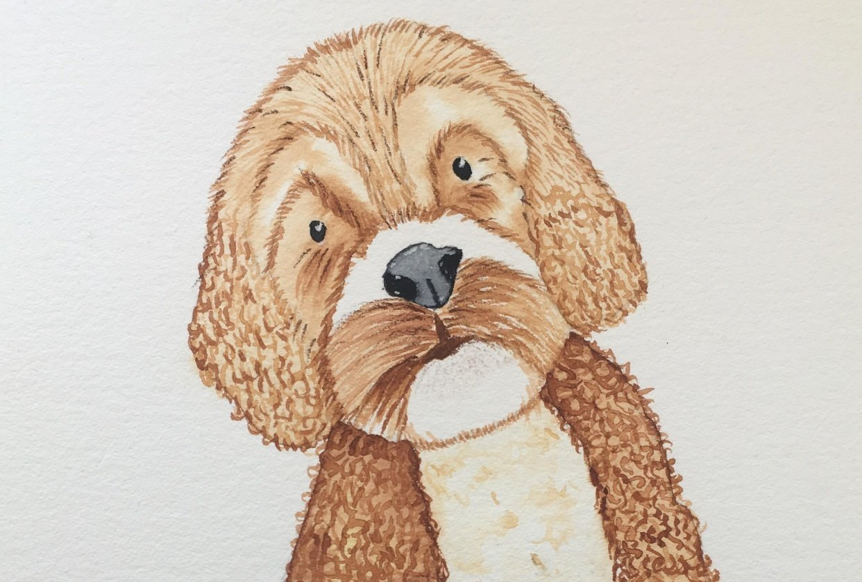 Little bit too brown puppy - student project