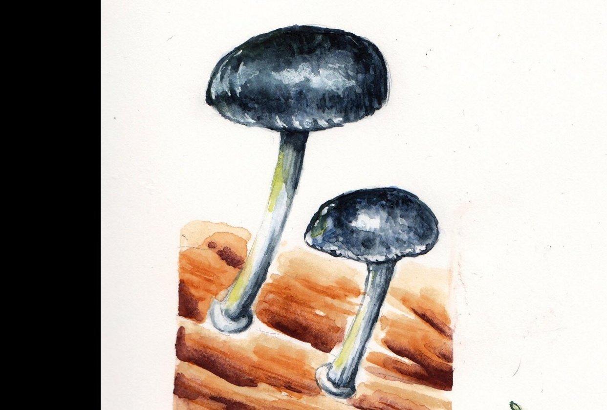 Mushroom & Fern - student project