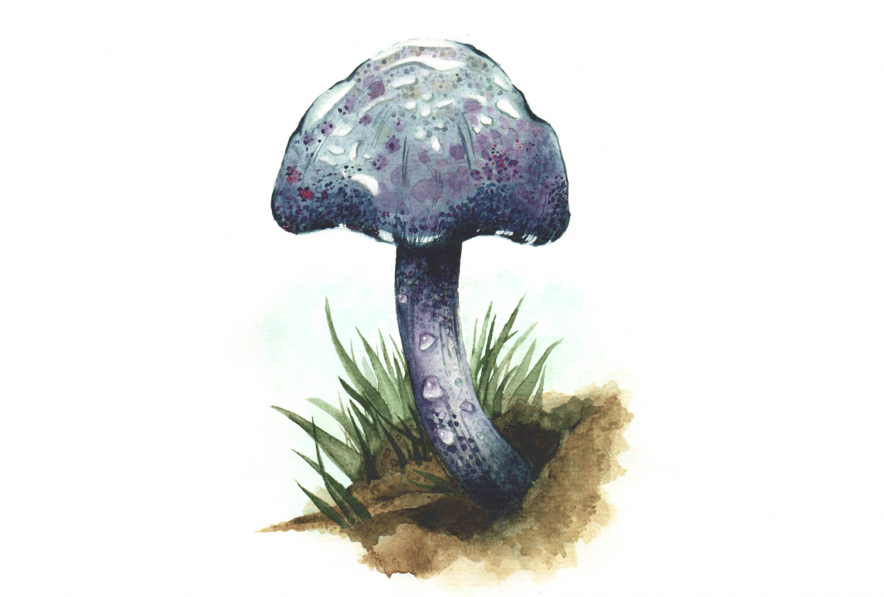 My speckled mushroom:) - student project