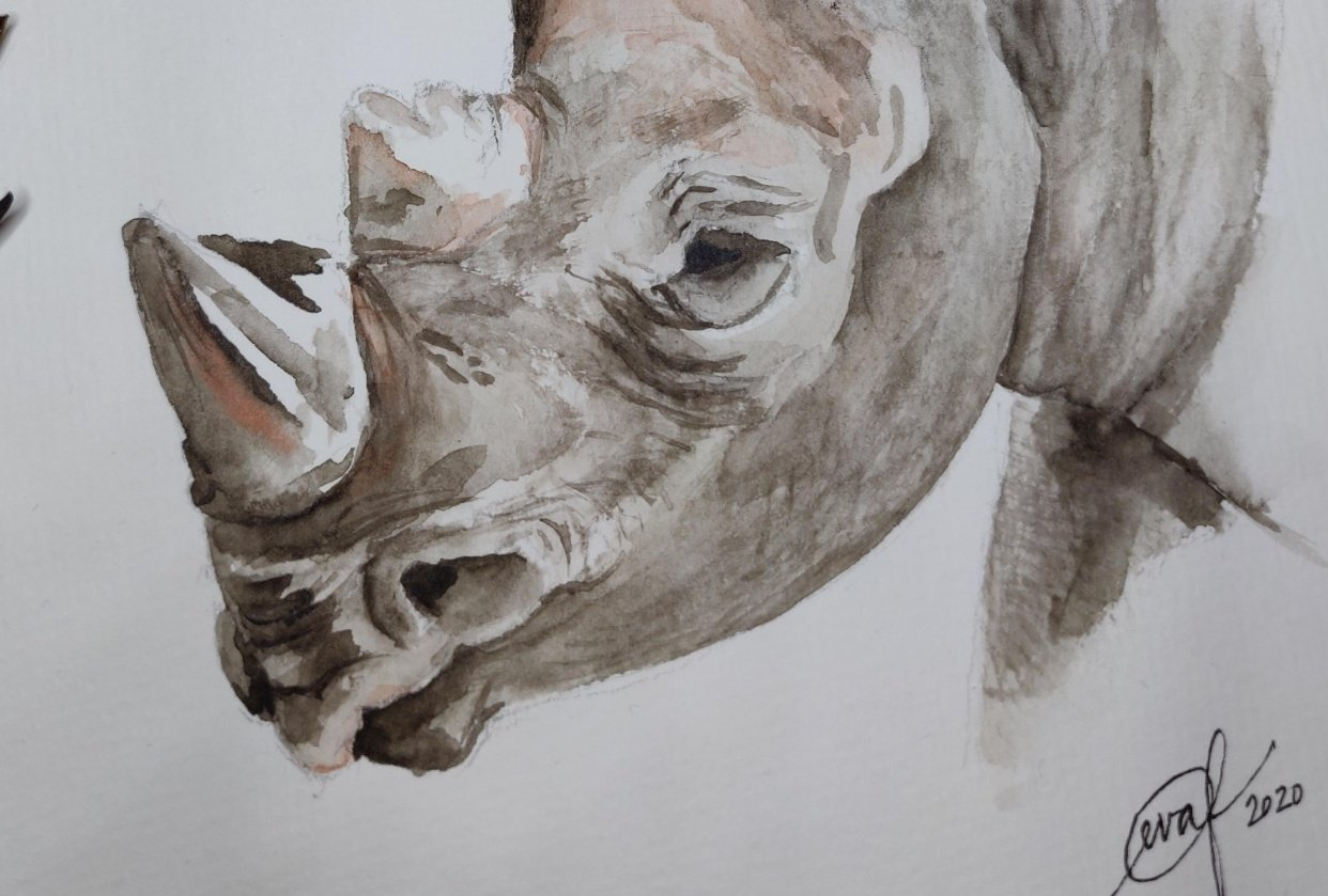 Class project: Rhinoceros - student project