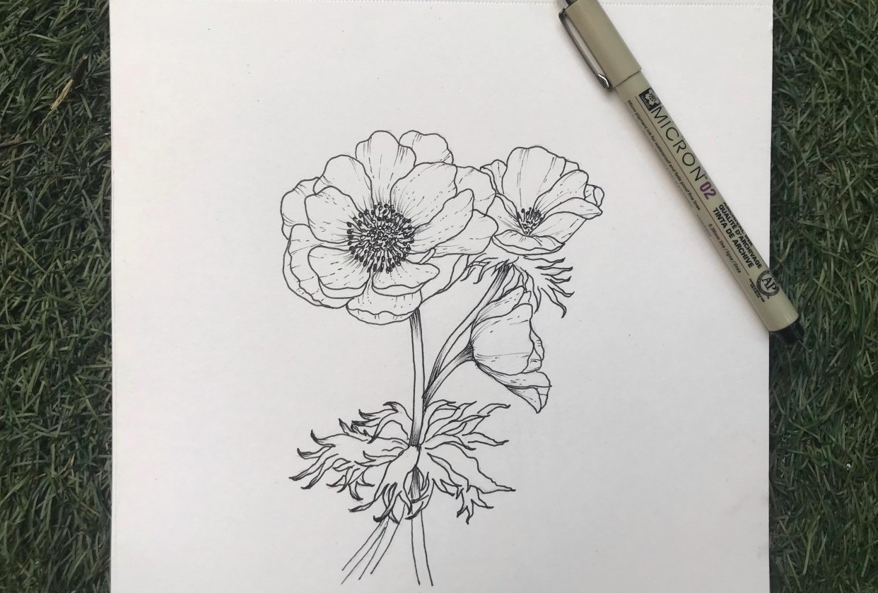 Anemones - the wind flower - student project