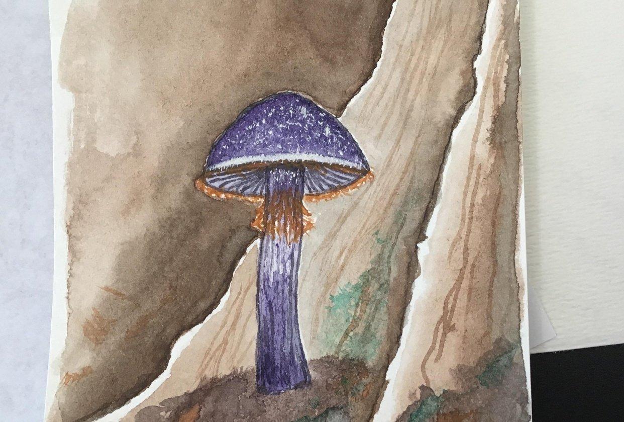 Purple mushroom - student project