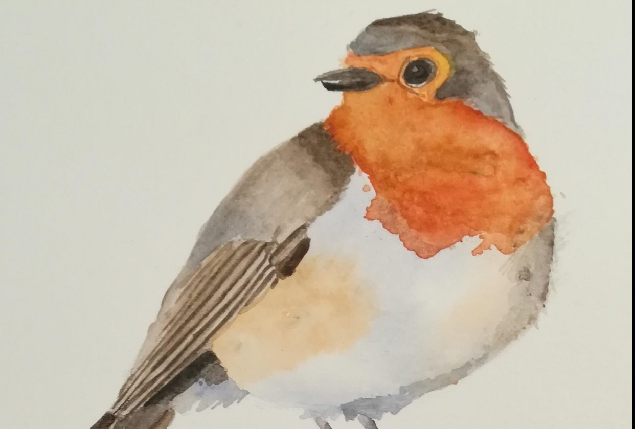 Bea's robin - student project