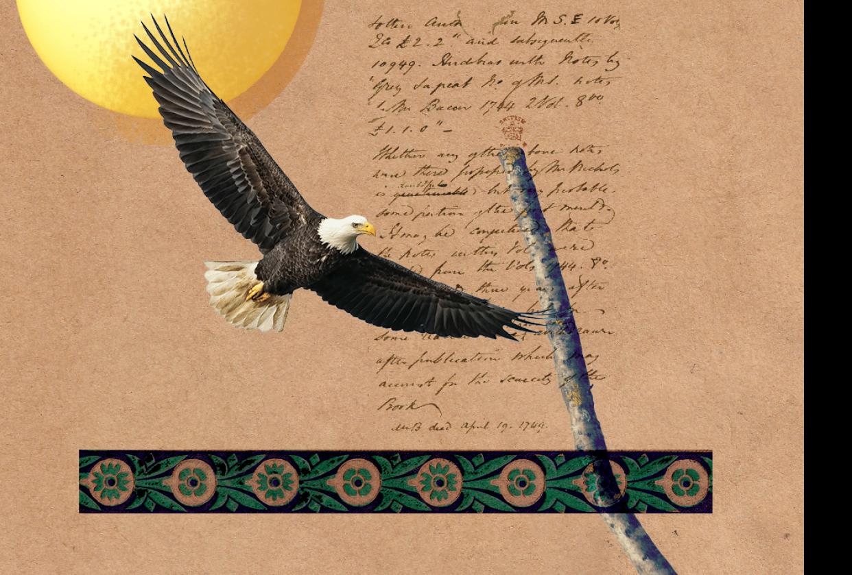 Sun Eagle - student project