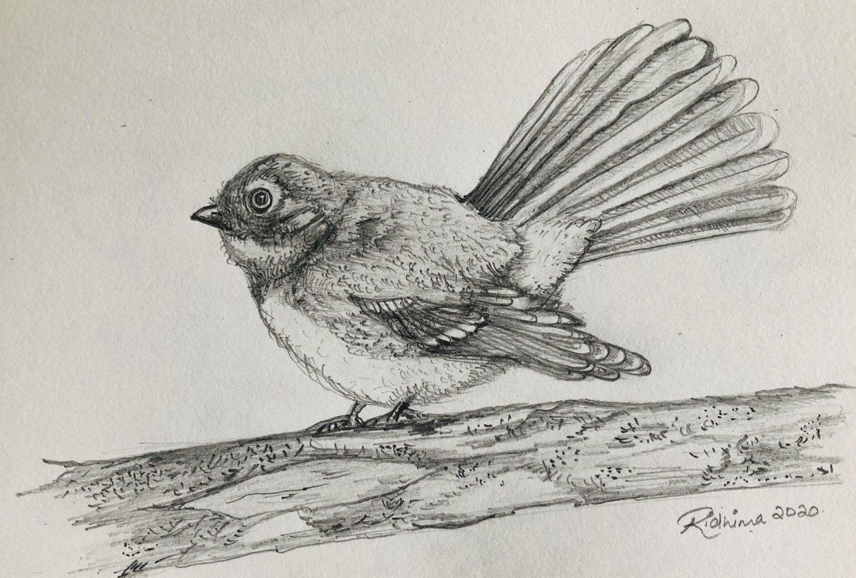 Bird Drawing - student project