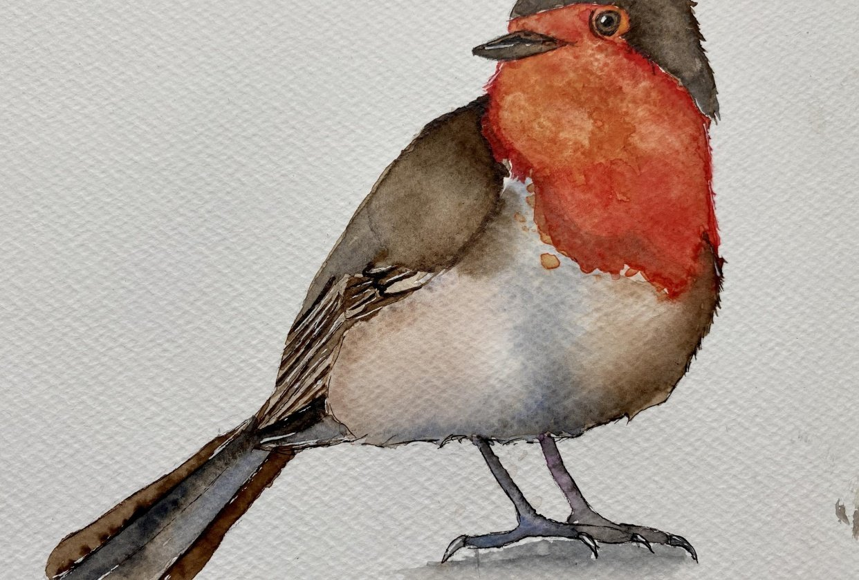 Watercolor Robin - student project