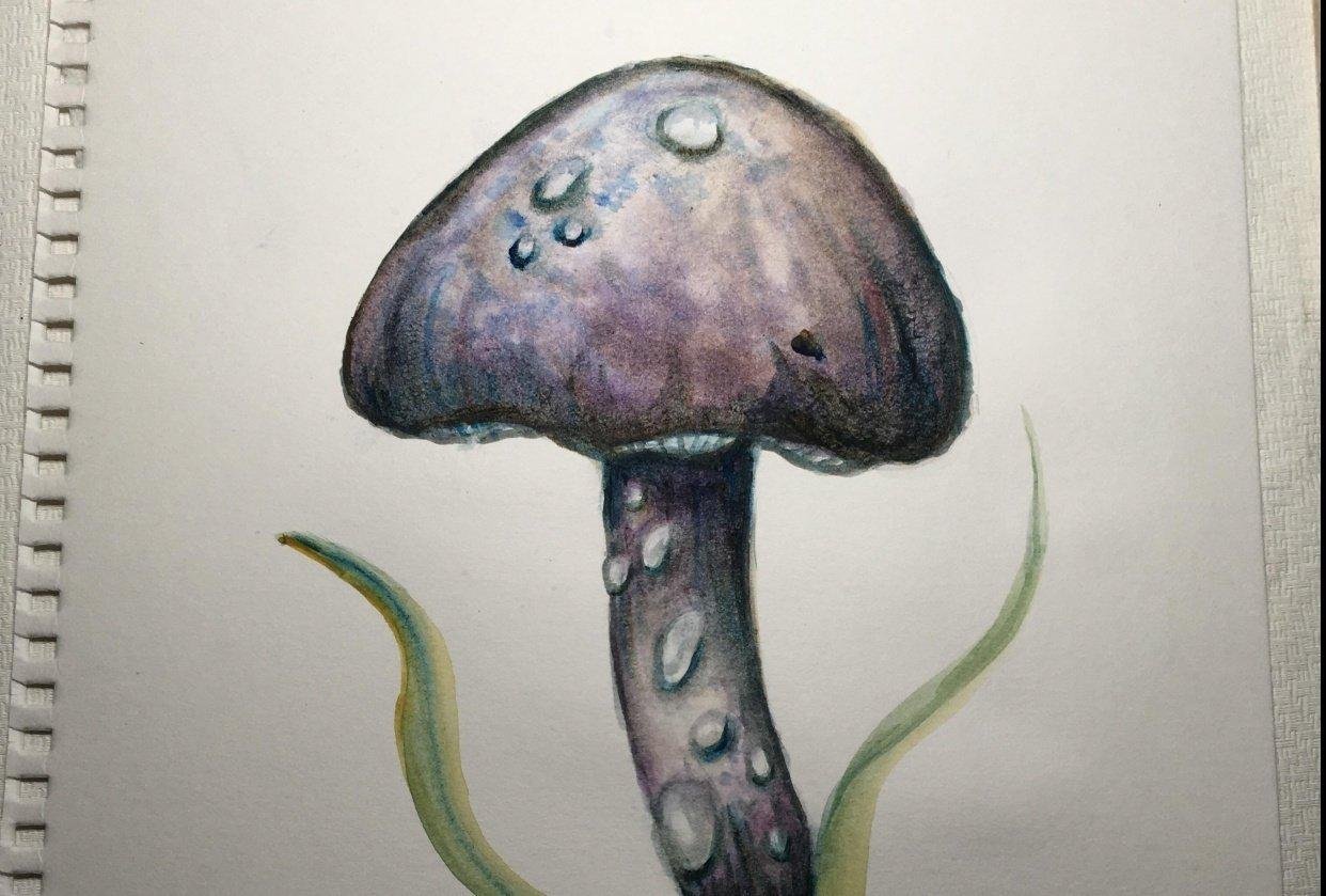 Mushroom Watercolor - student project