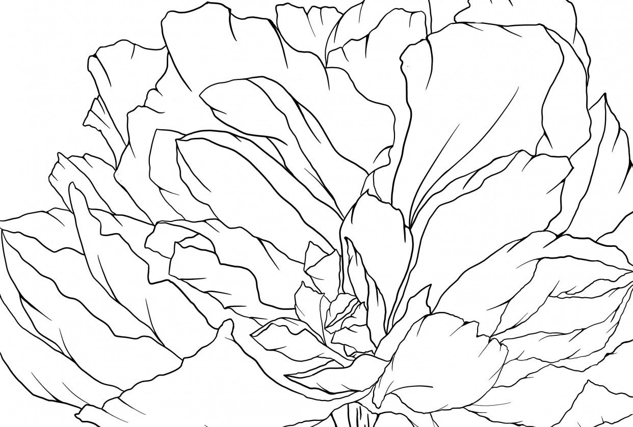 Peony Line Drawing - student project