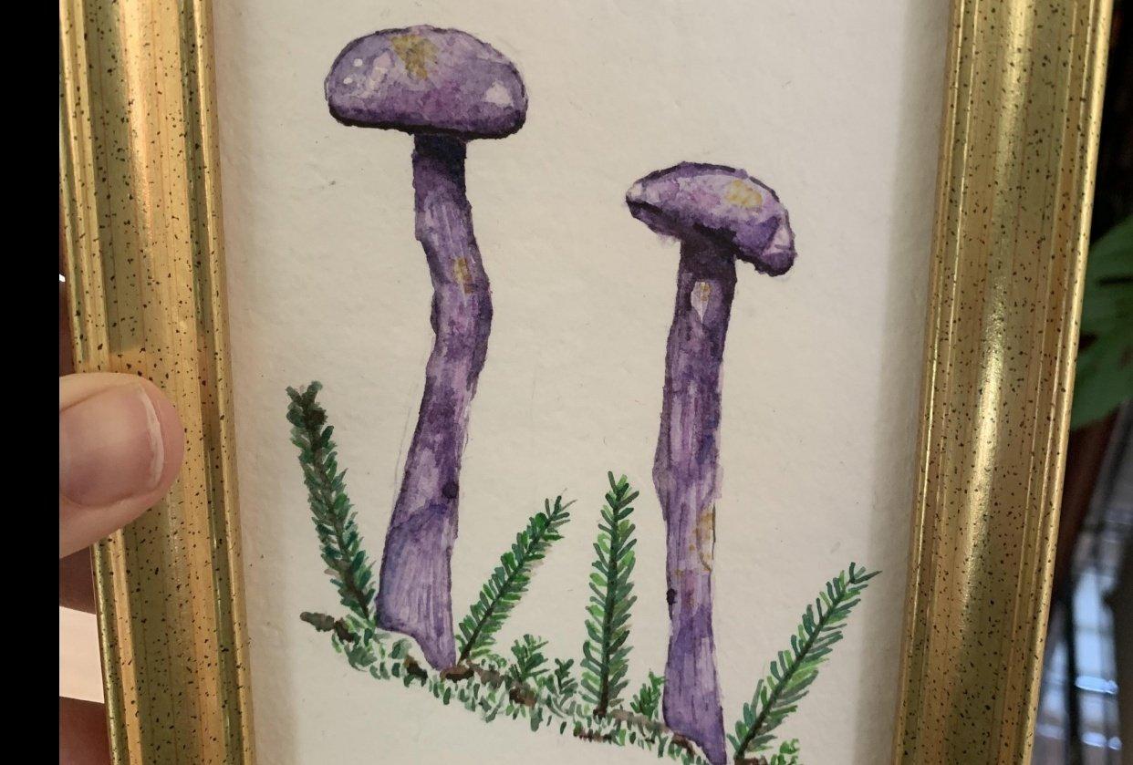 Purple Mushrooms - student project