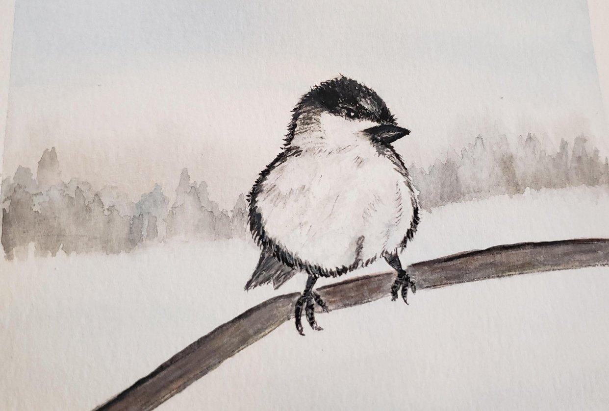 snow bird - student project