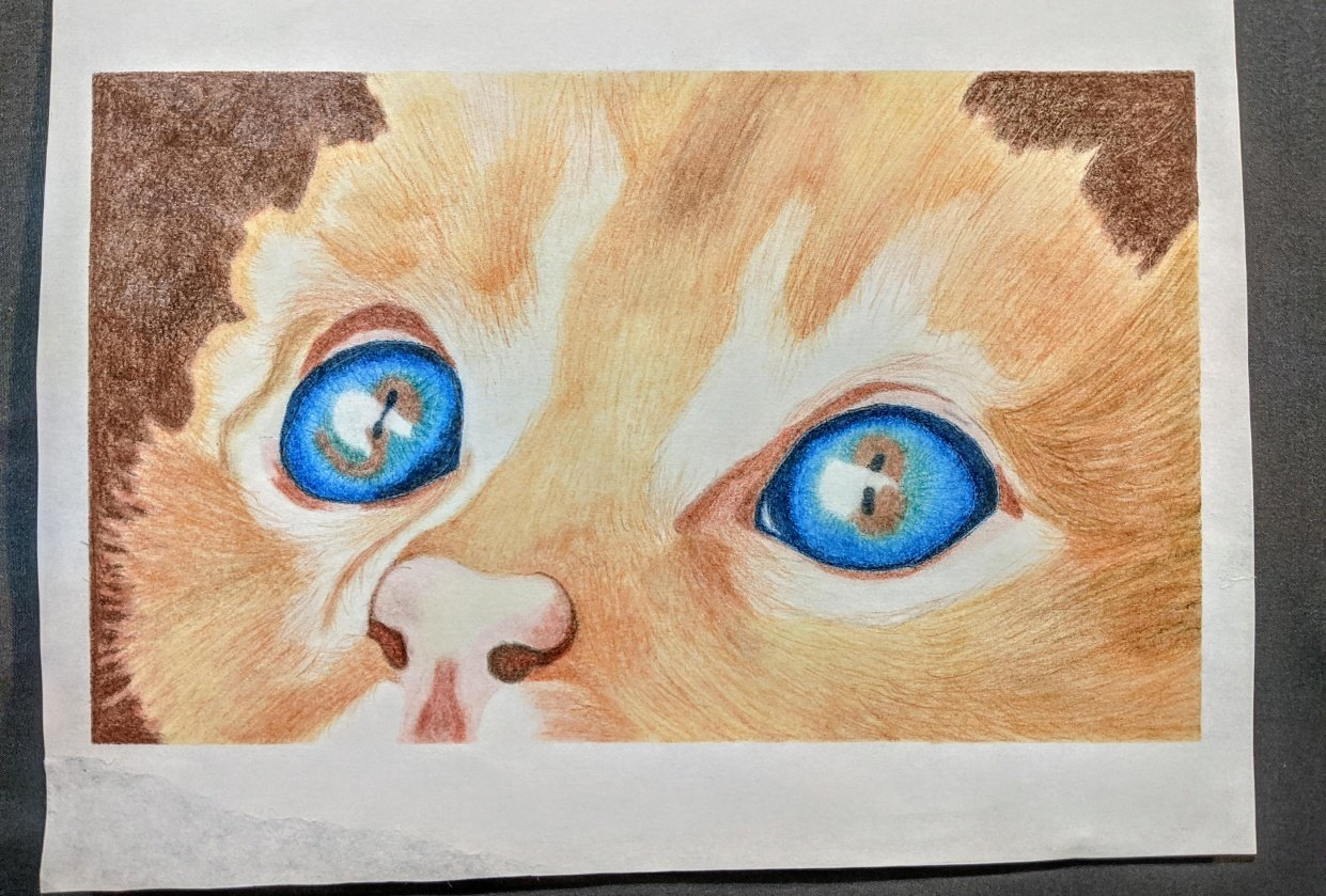 Cat Eyes Study - student project