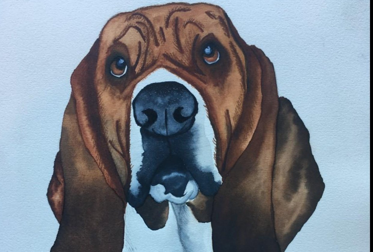 Cooper - Basset Hound - student project