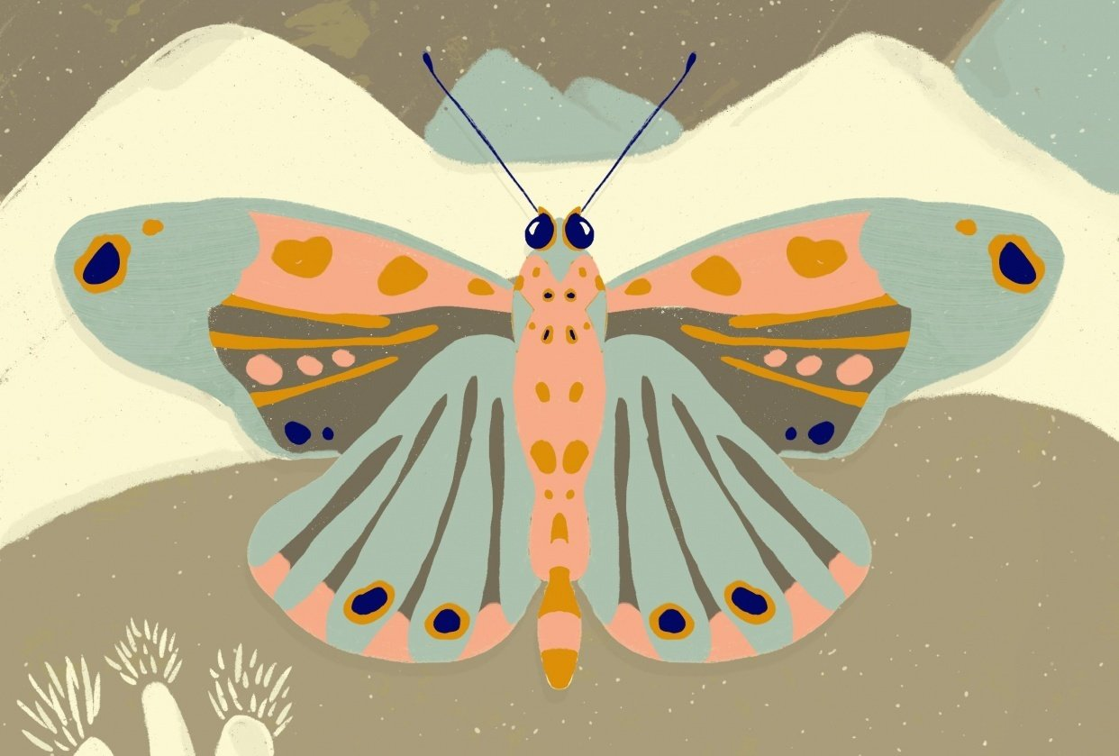 Mountain Butterfly - student project