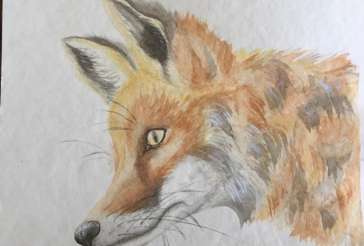 fox, flamingo, snake - student project